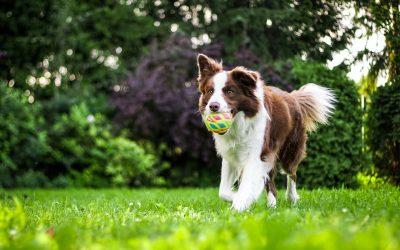 Dog Grooming Seasons Guide